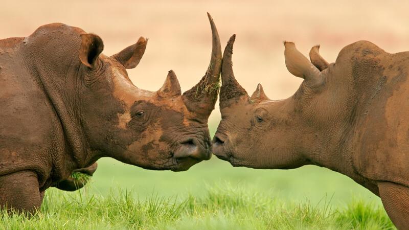 Kruger National Park card